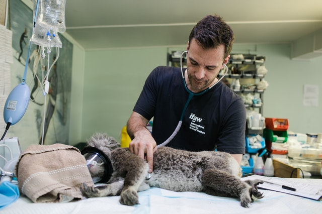 5 Things You Need To Know About Becoming A Veterinarian